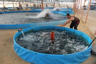 Hamaguen cultivo de peces en gaza for Tanques para cria de peces