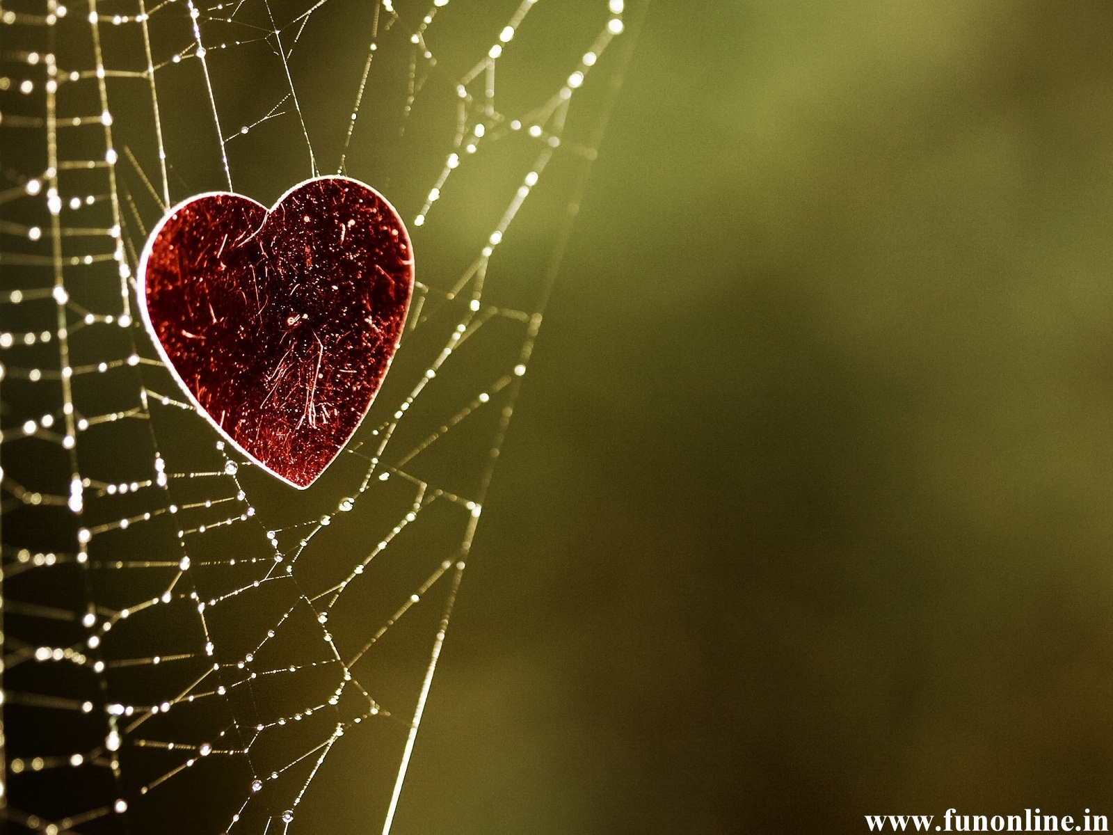 Cool Wallpaper Love Failure - Love-Heart-in-Spider-Web  Gallery_996735.jpg