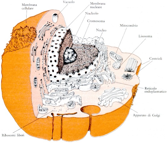 Aprendendo Biologia 2011: Citoplasma