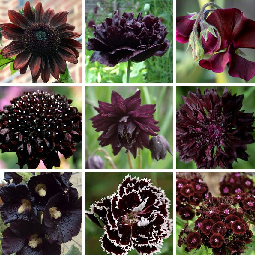 Almost Black Flowers