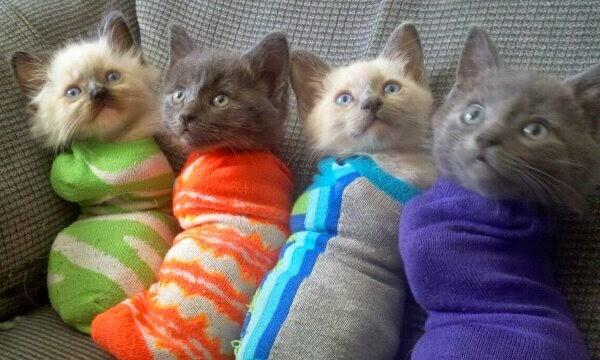 funny cats, cat photo, cute cat