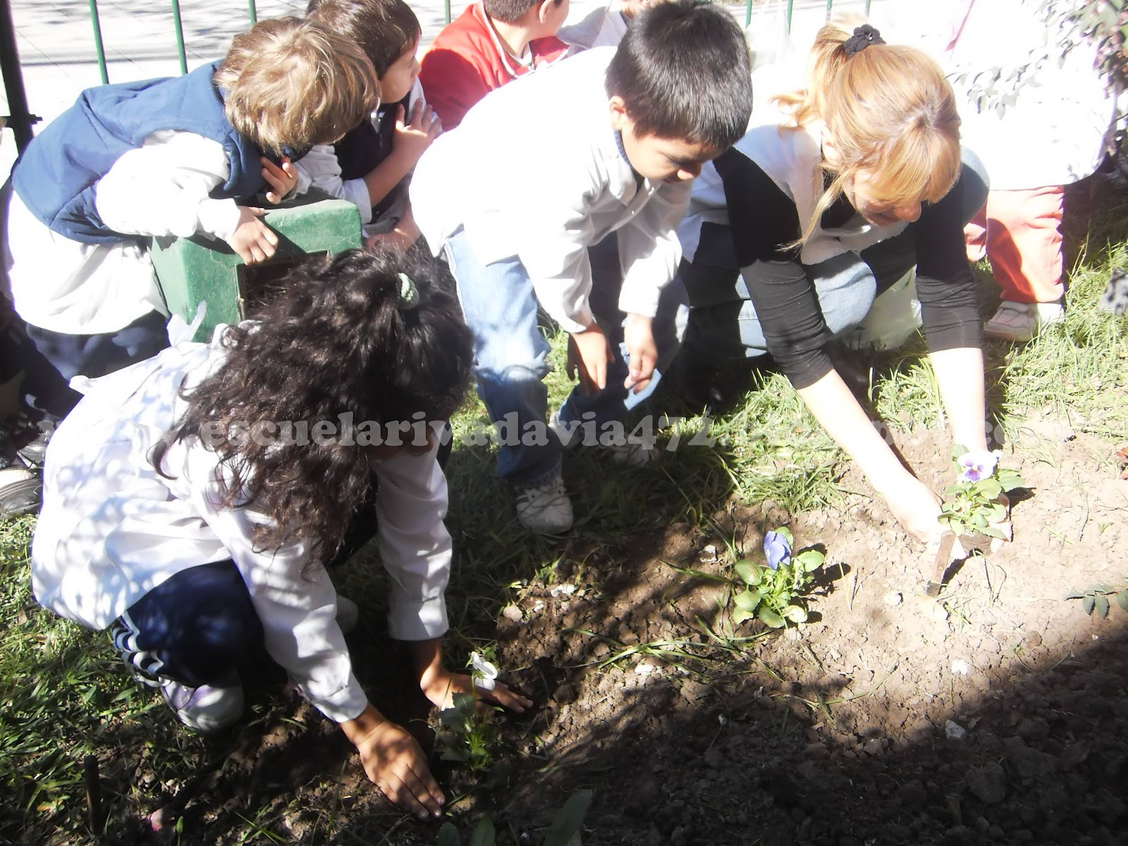 En el jard n de la escuela for Jardines pequenos para escuelas