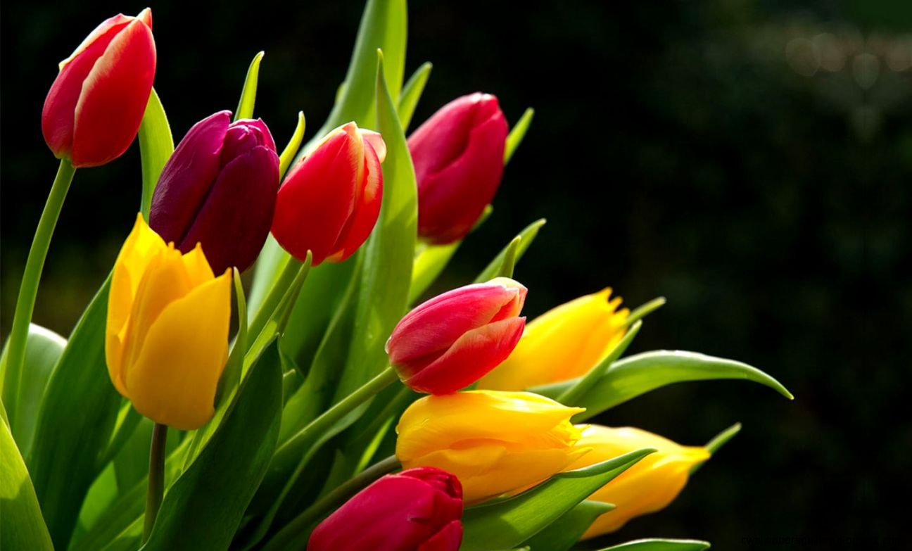 flower photos wallpaper