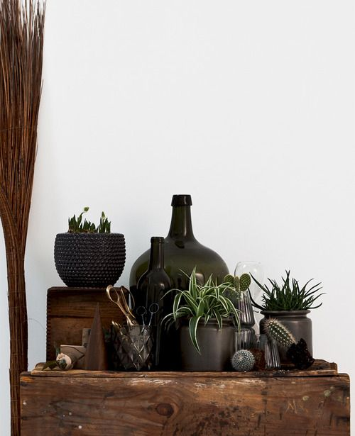 Dark Succulent Decor