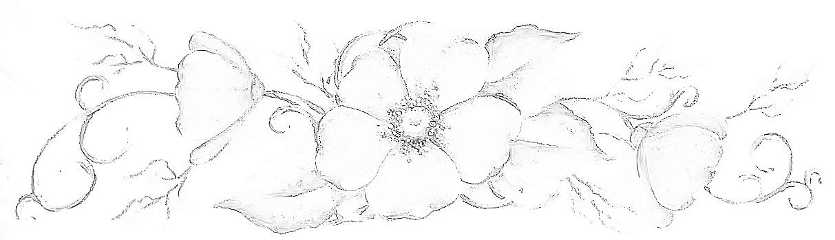 http://3.bp.blogspot.com/-NAUSujxhm40/US9RNxSBkjI/AAAAAAAANN4/f1kdVYevPgY/s1600/risco+desenho+flor+do+campo+pintura+em+tecido.JPG