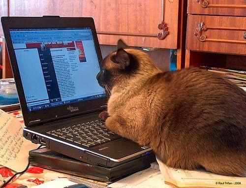 Mister CAT, un gato muy moderno