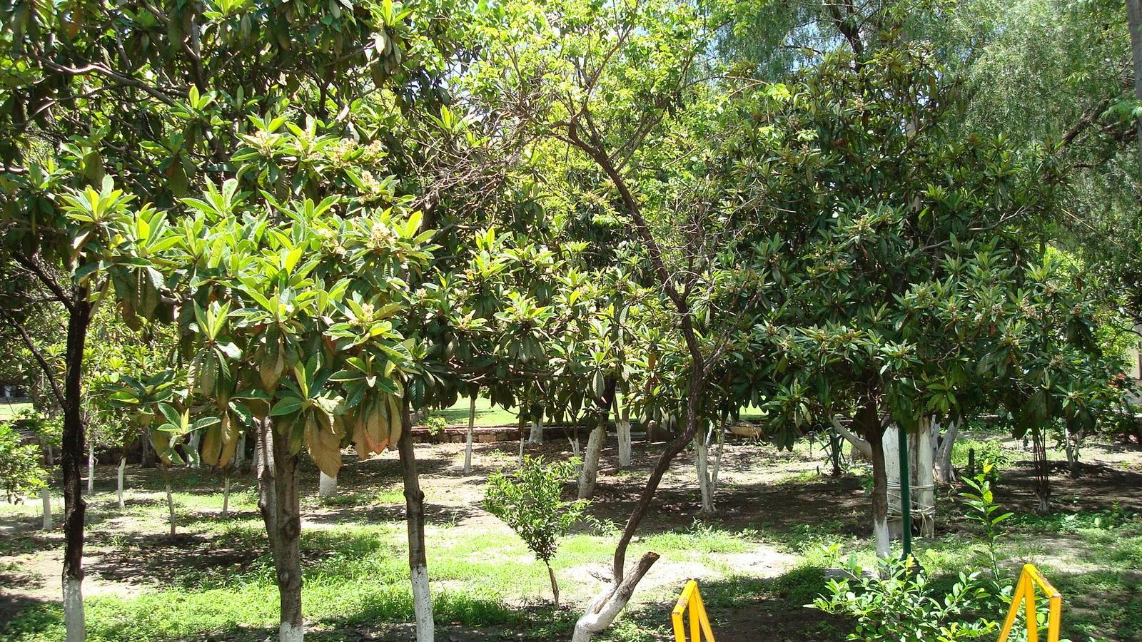 Sancarlosfortin arboles y plantas en queretaro for Arboles y plantas de jardin