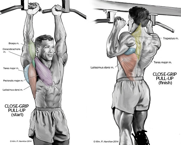 2 best bicep exercises for total development - all ...