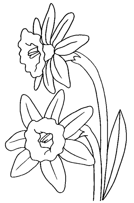 two large Rdtin in a single image for kids coloring