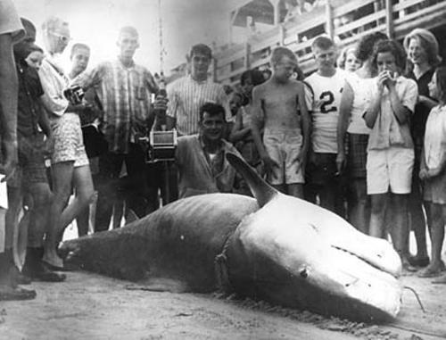 Walter Maxwell World Record Tiger Shark