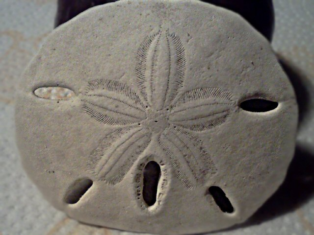 Sand Dollars Story
