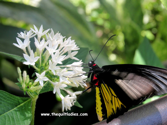 White Flower and Black Butterfly by Beth Ann Strub