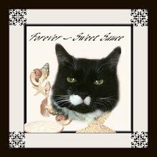 Catster & Blog Furend