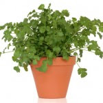 Guest Blogging for Growing Herbs For Beginners