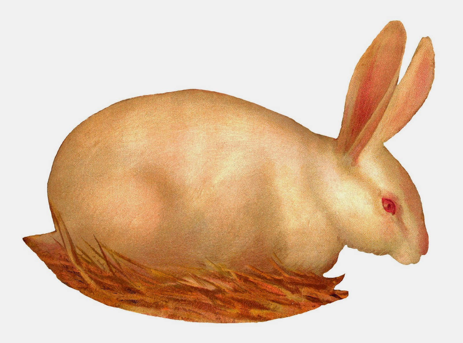http://3.bp.blogspot.com/-NCp_cwGAkOY/VOteord89fI/AAAAAAAAVqE/21aL0qcmt1E/s1600/scrap_rabbit_wht_2-2.jpg