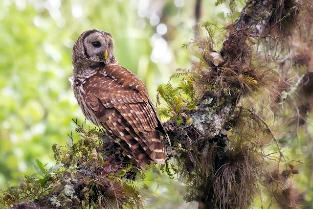 Búho Lechuza descansando en un nido imagenes de aves exoticas
