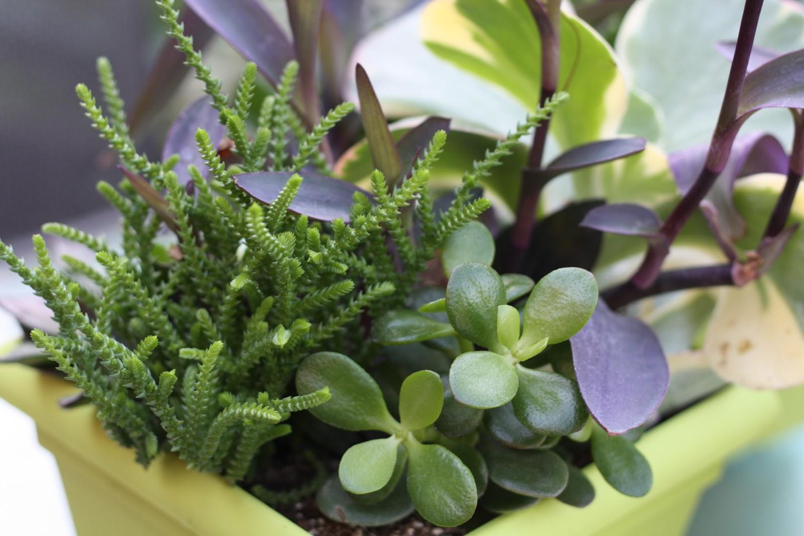 Duwest Reno Mini Succulent Gardens