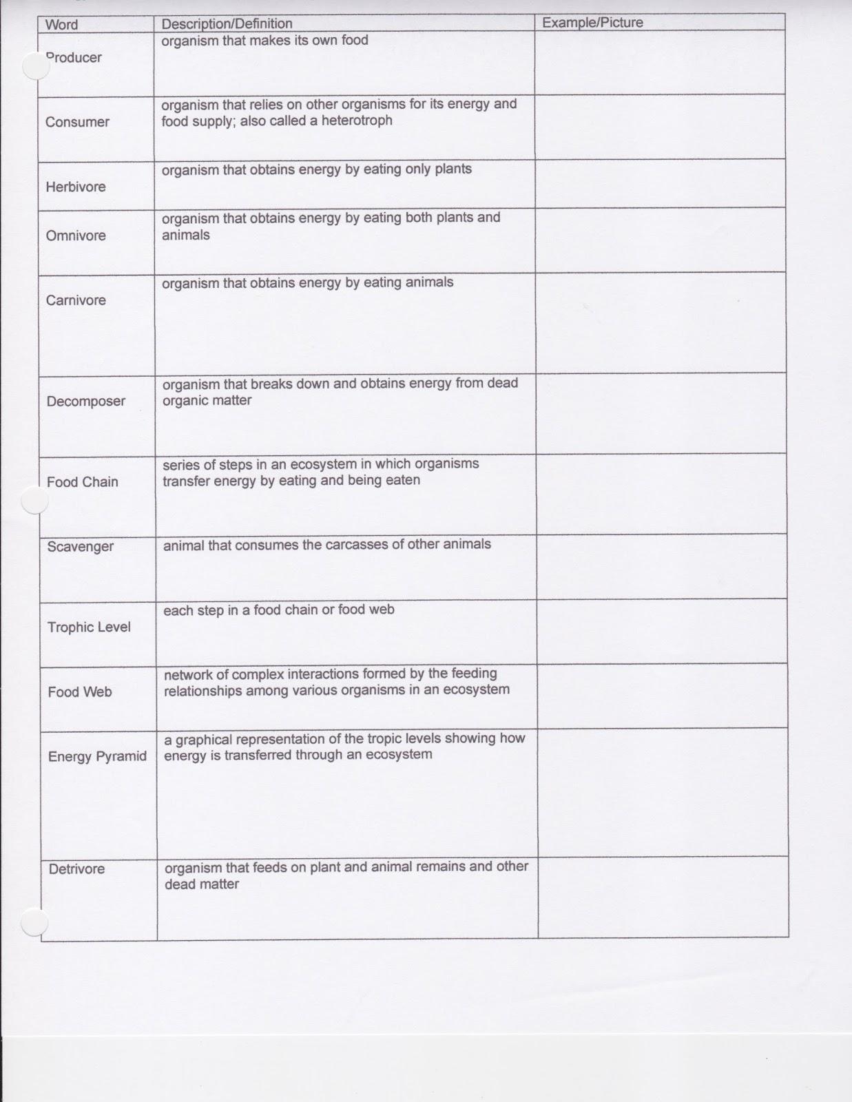 Food Chains Food Webs And Energy Pyramid Worksheet Key