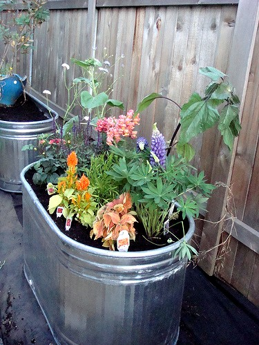 Knitzyblonde diy recycling gardening fun container gardens - Galvanized containers for gardening ...