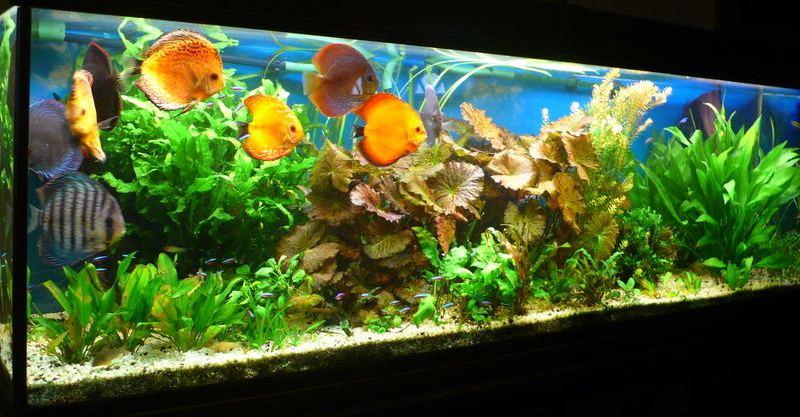 Produits anti algues engrais pour aquarium conditionneur for Exemple de decoration aquarium