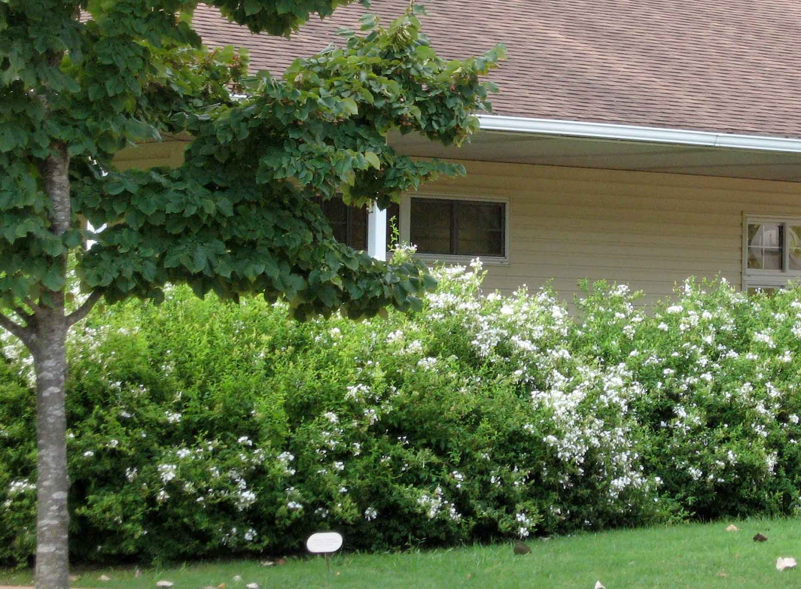Arbustos de jardin con flor stunning arbustos de jardin con flor with arbustos de jardin con Arbustos de jardin