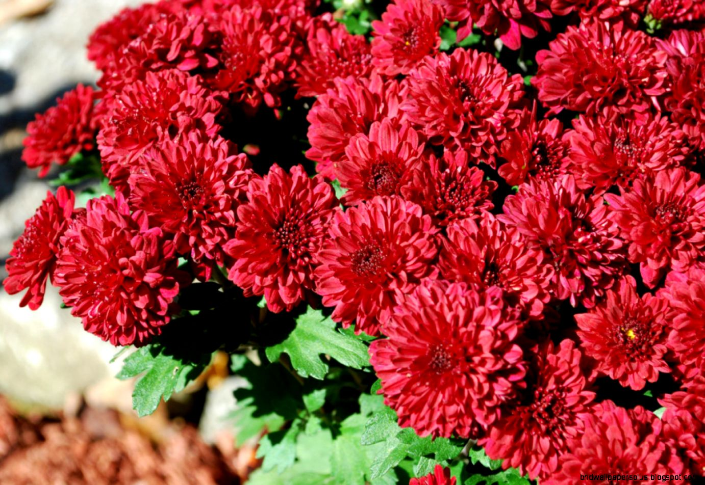 Fall flowers hd wallpapers plus view original size izmirmasajfo