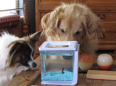 All things dog blog for Water dogs fish