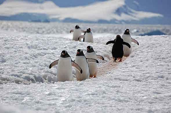 Sebagian Antartika Pernah Memiliki Iklim yang Mirip dengan Pesisir California