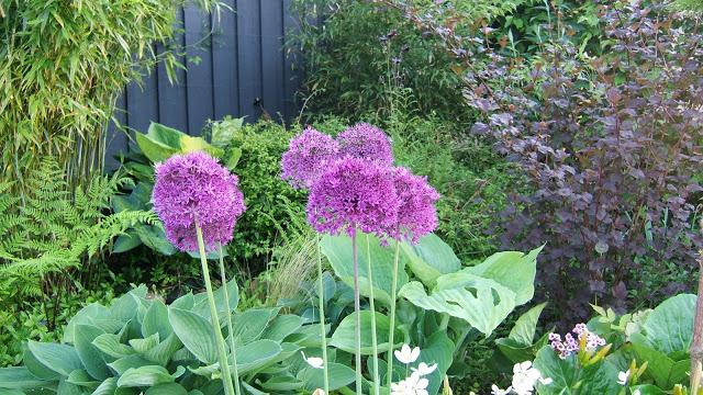 Allium – Så förökar du dem!