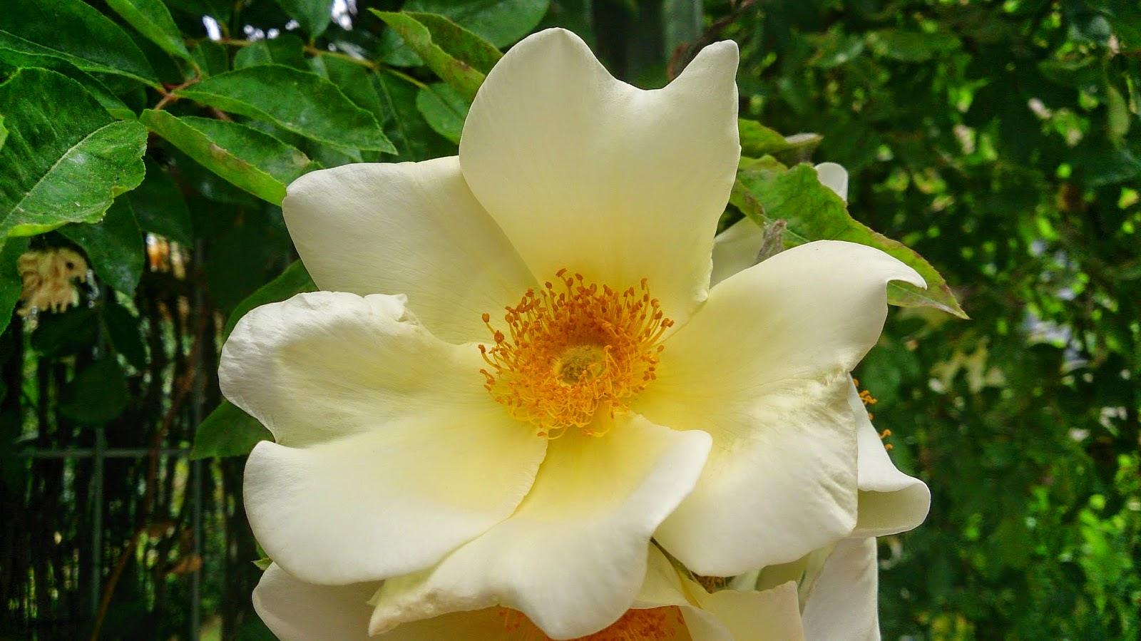 White Flowers Nameswhite Names