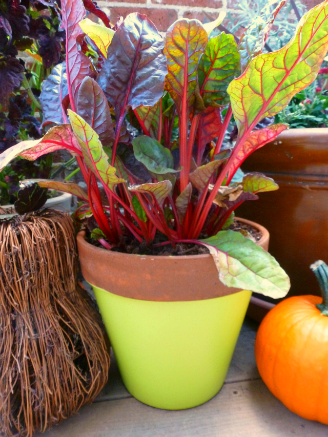 Fall outdoor decor ideas