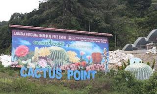 cactus_point.jpg