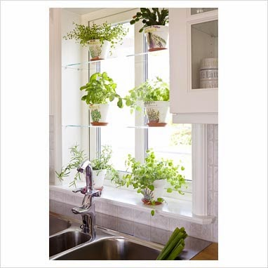 Simple Kitchen Herb Garden rangkatha ~tales of colors, crafts & decor: aroma in air!!