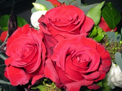 Red Roses Flowers photos and wallpapers