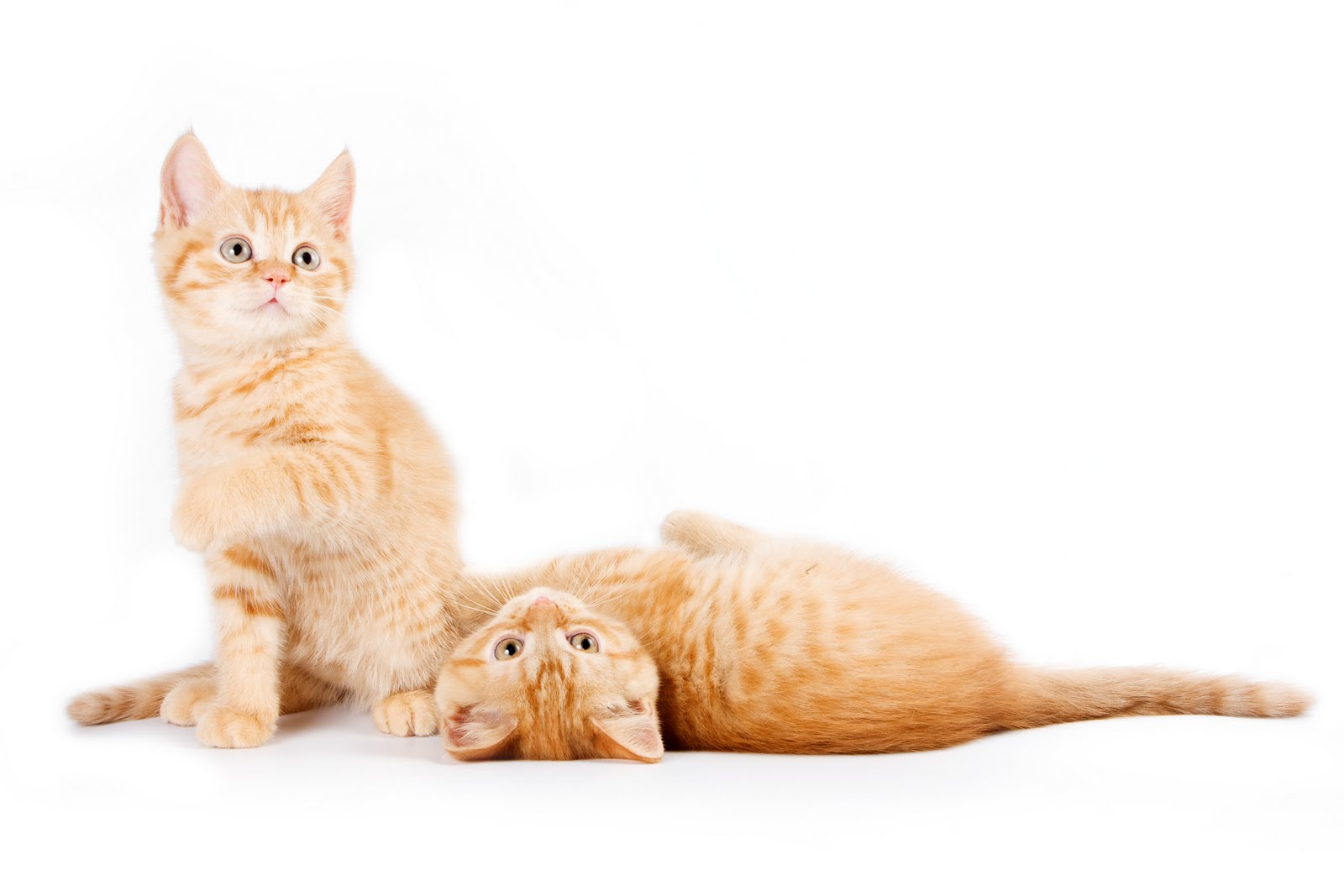 Cats Won T Accept New Kitten