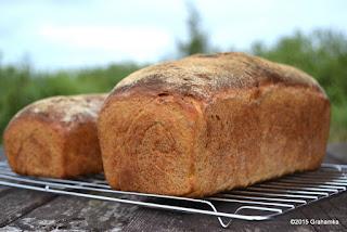 Chlebowa perspektywa z krzakami i niebem w tle