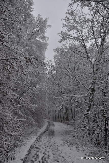 Snow in the forest, Frankfurt, Germany