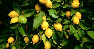 الفجل والليمون للتخلص من و لازالة النمش في الوجه و الجسم