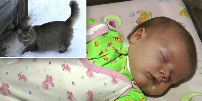 Dirusia, Seekor Kucing Selamatkan Bayi Dari Cuaca Dingin Nol Derajat