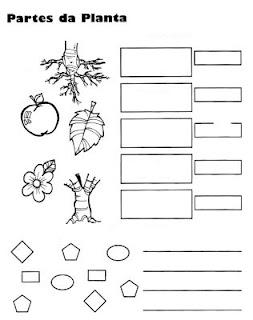 para aprender completando y coloreando las partes de una planta
