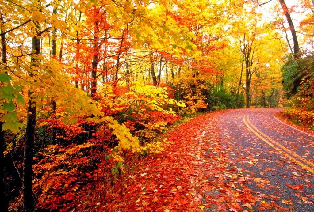 Fall Months: Seasons Of Pakistan