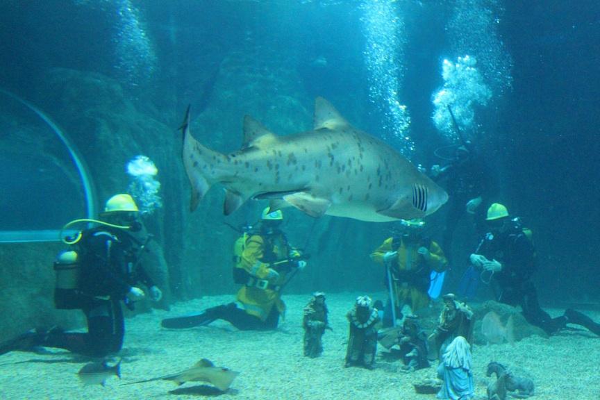 Aquarium De Roquetas Cuatro Bomberos Nadan Entre Los