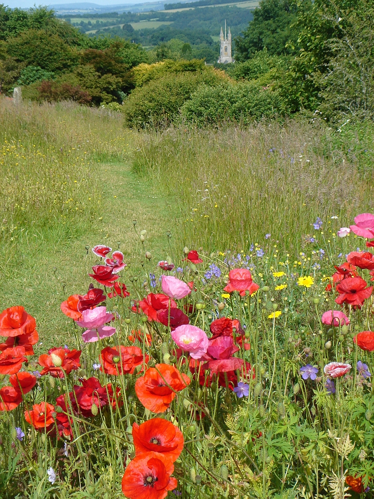 The wild flower meadow with poppies okay wallpaper for Wild grass gardens