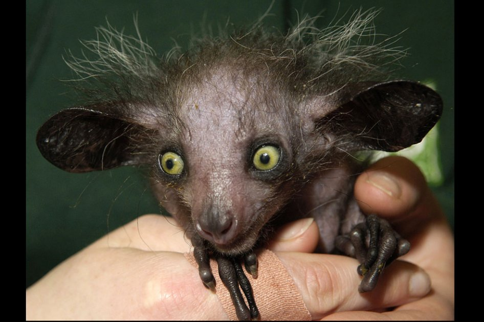 Los animales más feos, horrorosos y raros del planeta  - imagenes de los animales mas extraños del mundo
