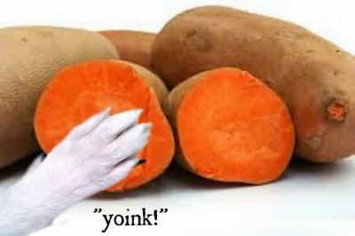 health benefits of feeding sweet potato to dogs