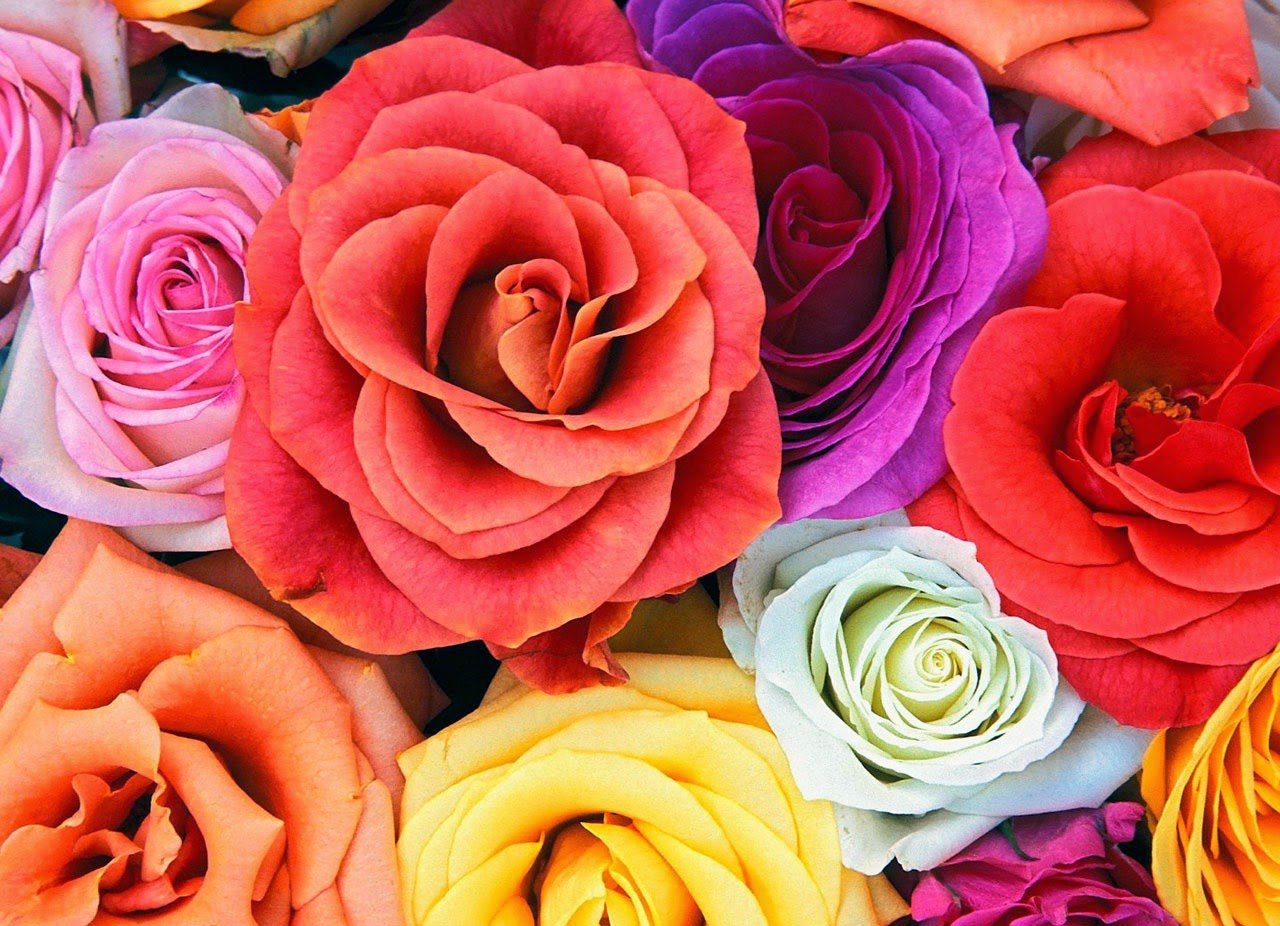 Beautiful Flower Wallpapers For Facebook