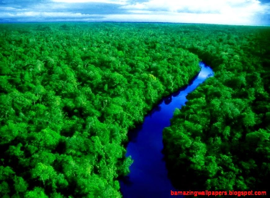 View Original Size Amazon Rainforest Beauty Places Image Source From This