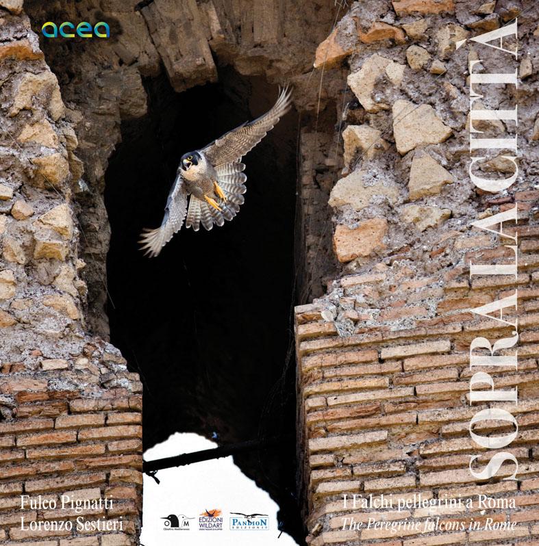 Sopra la città - I Falchi pellegrini a Roma