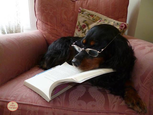 Molly The Wally Has A Read!