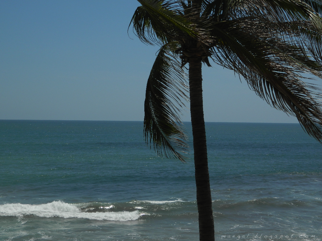 mazatlan sinaloa mexico day beach palm tree pacific ocean